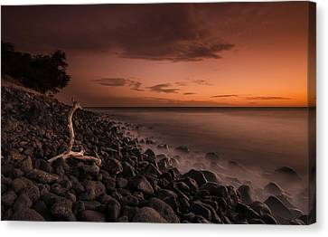 The Log And The Beach Canvas Print
