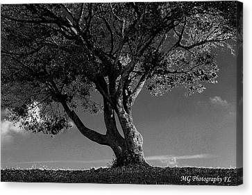 The Lone Tree Black And White Canvas Print by Marty Gayler