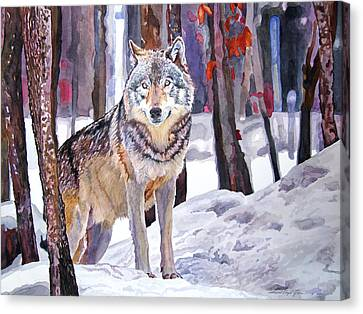Wolves Canvas Print - The Lone Wolf by David Lloyd Glover