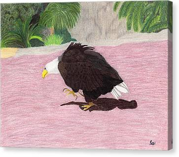 The Lonely Eagle Canvas Print by Bav Patel
