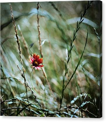 The Lonely Flower Canvas Print
