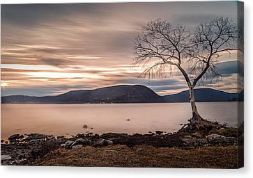 Canvas Print featuring the photograph The Lonely Tree by Anthony Fields
