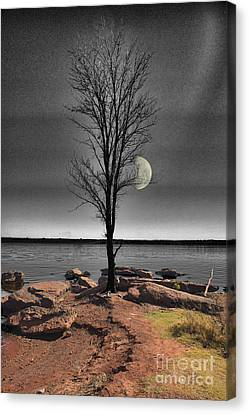 The Lonely Tree Canvas Print by Betty LaRue