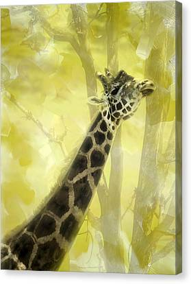 The Long Morning Stretch Canvas Print by Diane Schuster