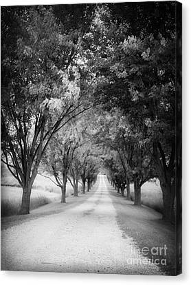 The Long Road Home Canvas Print by Edward Fielding