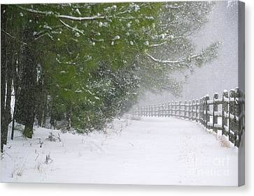 The Long Walk Home Canvas Print