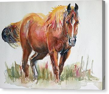Horse Painting In Watercolor The Longest Journey Canvas Print by Maria's Watercolor