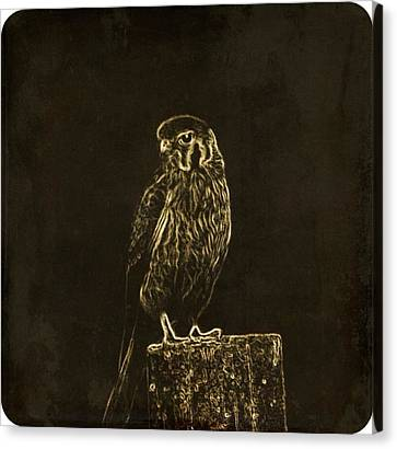 Falcon Canvas Print - The Hunt by Justin Ivins