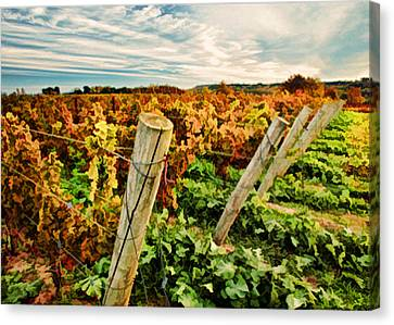 The Look Of Fall In The Vineyard Sky Canvas Print