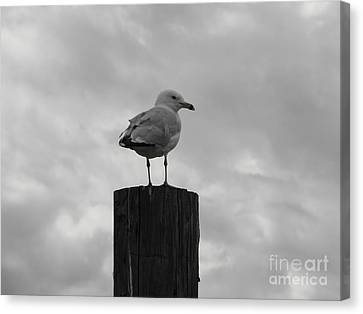 The Lookout Canvas Print by Michael Krek