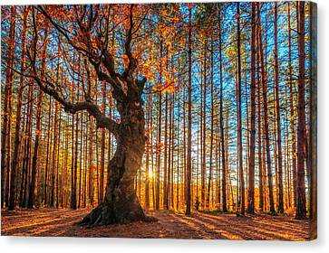 Autumn Landscape Canvas Print - The Lord Of The Trees by Evgeni Dinev