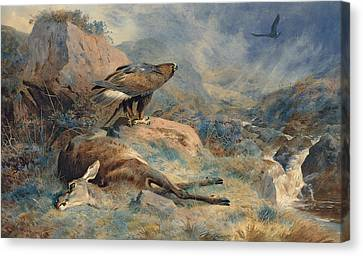 The Lost Hind Canvas Print by Archibald Thorburn