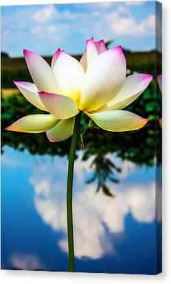 The Lotus Blossom Canvas Print by Jon Woodhams