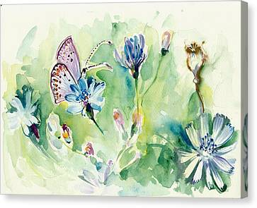 The Love Between Butterfly And Chicory Canvas Print by Tiberiu Soos