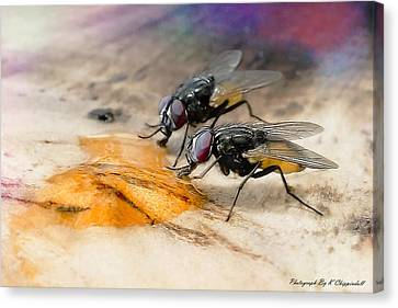 The Love Of Honey 01 Canvas Print by Kevin Chippindall