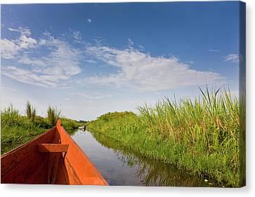 The Mabamba Wetlands Near Kampala Canvas Print by Martin Zwick