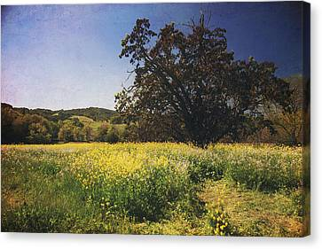 The Magic Field Canvas Print by Laurie Search