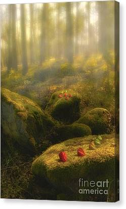 The Magic Forest Canvas Print by Veikko Suikkanen