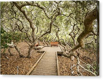 Wooden Platform Canvas Print - The Magical El Moro Elfin Forest. by Jamie Pham