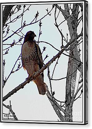 The Majestic Hawk Canvas Print