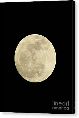 The Man In The Moon Canvas Print by Elizabeth Dow