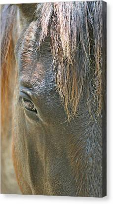 The Mane Eye Canvas Print by Bruce Gourley