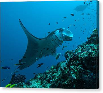 Canvas Print featuring the photograph The Manta From Manta Alley by Terry Cosgrave