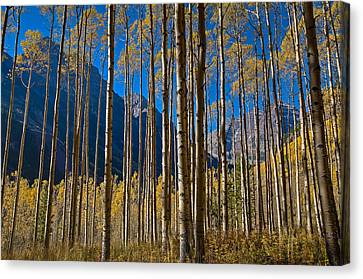 Colorado Captures Canvas Print - The Maroon Curtain by Mike Berenson