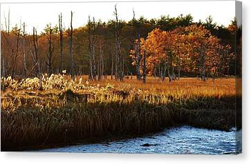 Canvas Print featuring the photograph The Marsh by Paul Noble