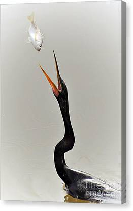 The Master Fisher Canvas Print by Kathy Baccari