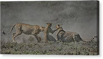 Canvas Print featuring the photograph The Mating Game by Gary Hall