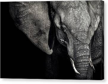 The Matriarch Canvas Print