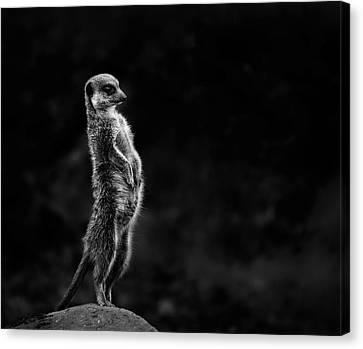 Observer Canvas Print - The Meerkat by Greetje Van Son