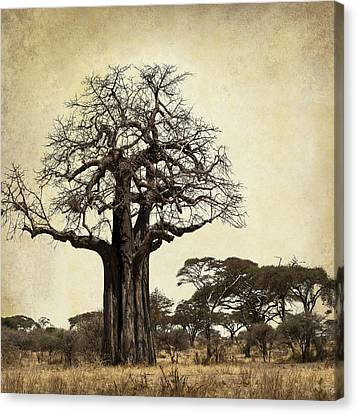 The Mighty Baobab Tree Of Life Canvas Print