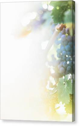 The Modern Grape 3 Canvas Print by Clint Brewer