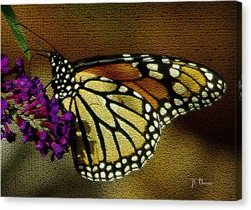 The Monarch / Butterflies Canvas Print by James C Thomas