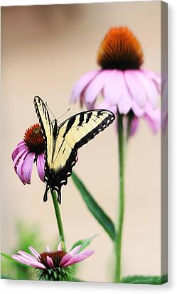 Canvas Print featuring the photograph The Swallowtail by Trina  Ansel