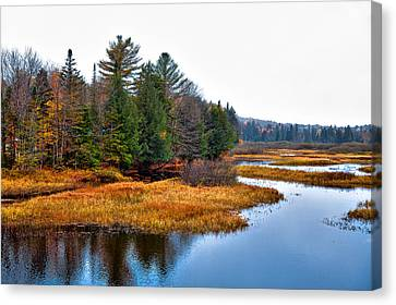 Fir Trees Canvas Print - The Moose River In The Adirondack's by David Patterson