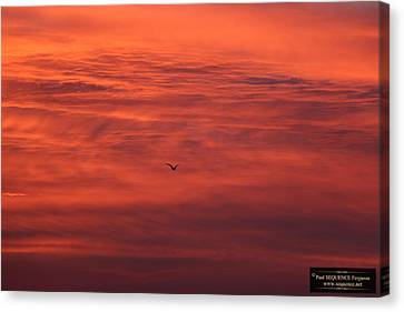 Canvas Print - The Morning View 4 by Paul SEQUENCE Ferguson             sequence dot net
