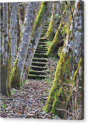 The Moss Stairs Canvas Print by Kirt Tisdale