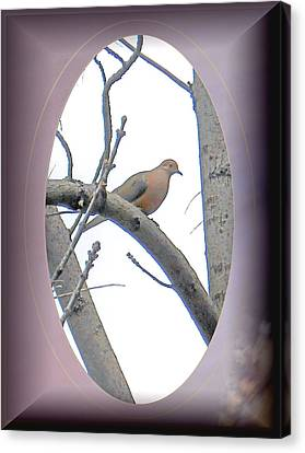 The Mourning Dove Canvas Print by Patricia Keller