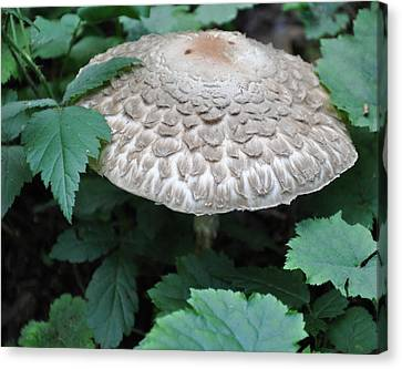 The Mushroom Canvas Print by Kirt Tisdale