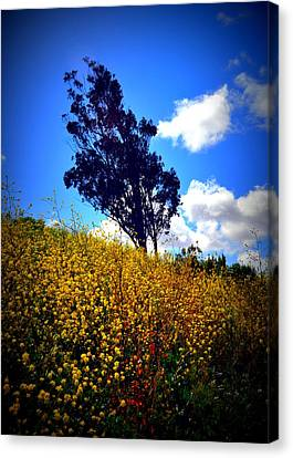 The Mustard Hillside Canvas Print by Lisa Holland-Gillem
