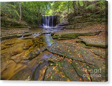The New Fall  Canvas Print by Darren Wilkes