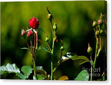 The New Generation Canvas Print by Susanne Van Hulst