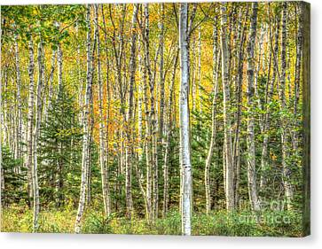 Canvas Print featuring the photograph The North Woods by Wanda Krack