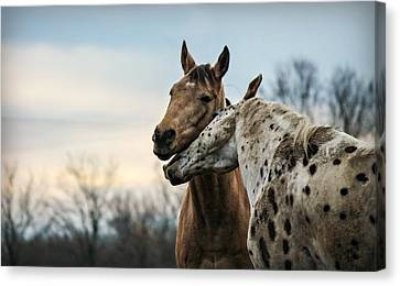 The Nuzzler Canvas Print