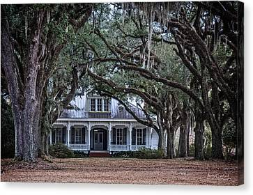 The Oaks Plantation Canvas Print by Andy Crawford