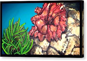 The Odd Couple Two Very Different Sea Anemones Cohabitat Canvas Print by Kimberlee Baxter