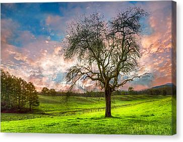 Tn Barn Canvas Print - The Old Apple Tree At Dawn by Debra and Dave Vanderlaan